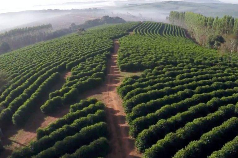 Fazenda Camocim – biodynamiczny proces uprawy kawy