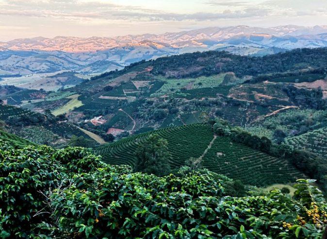 Brazil Vargem Alegre Gorilla Coffee-4