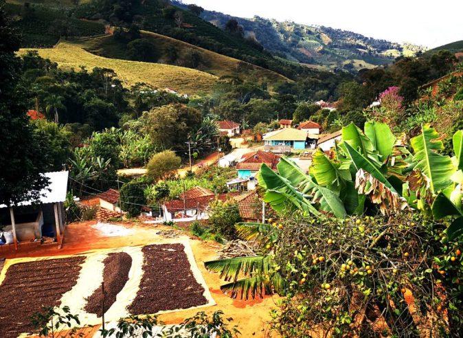 Brazil Vargem Alegre Gorilla Coffee-1