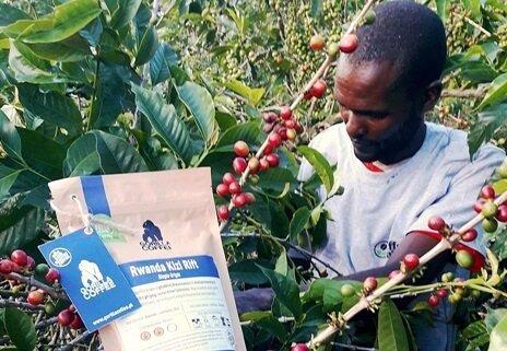 wyprawa do Rwandy Gorilla Coffee