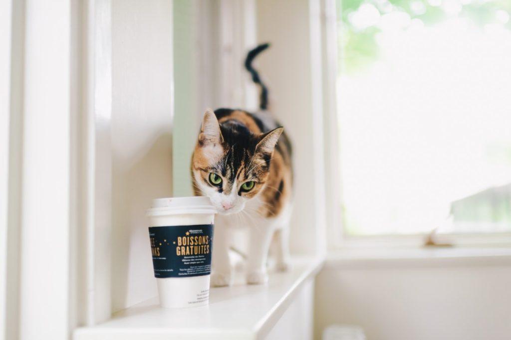 papierowy kubek z kawą i kot na parapecie